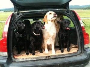 5 Hunde ein Auto