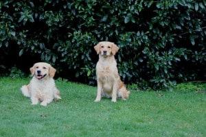 Formwertbeurteilung - Lucy und Abby